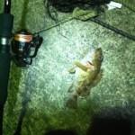食べて美味しいカサゴのルアー釣り